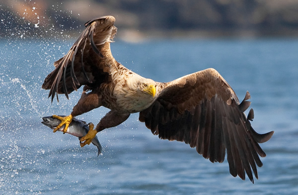 Beautiful Examples of Bird Photography - Every day is sushi day