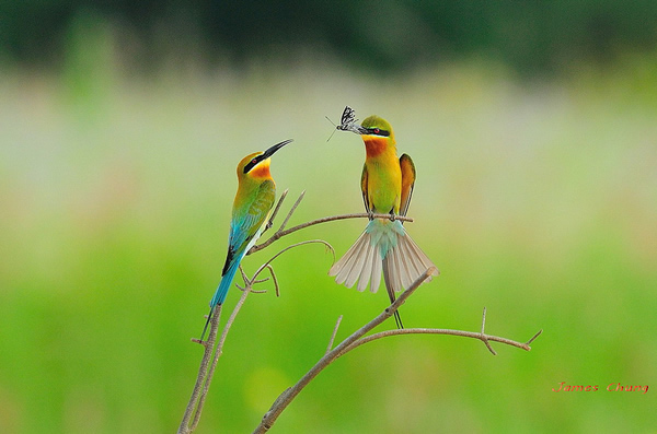 Beautiful Examples of Bird Photography - Cute Birds