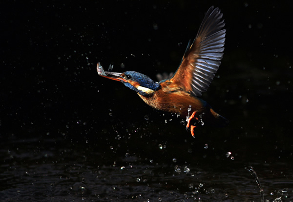 Beautiful Examples of Bird Photography - The Catch