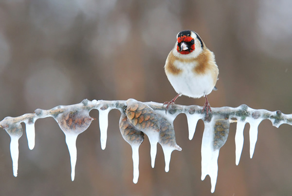 Beautiful Examples of Bird Photography - Below Zero