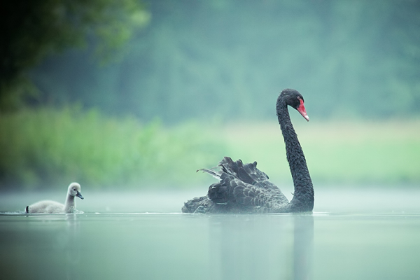 Beautiful Examples of Bird Photography - In the morning mist