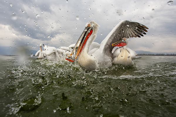 Beautiful Examples of Bird Photography - Wet