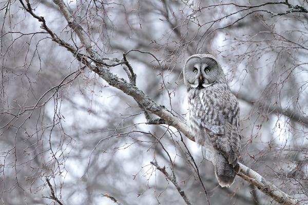 Beautiful Examples of Bird Photography - All Grey