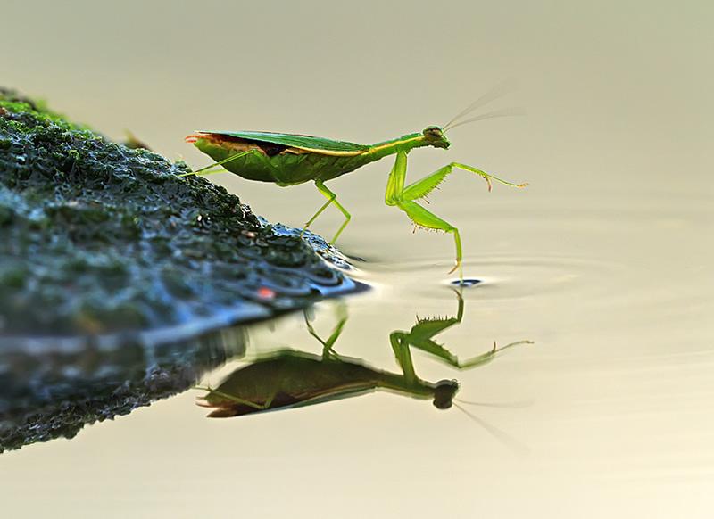 Mindblowing Macro Photography by Shikhei Goh