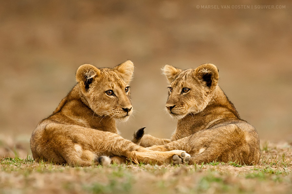 Interview with Nature Photographer Marsel Van Oosten