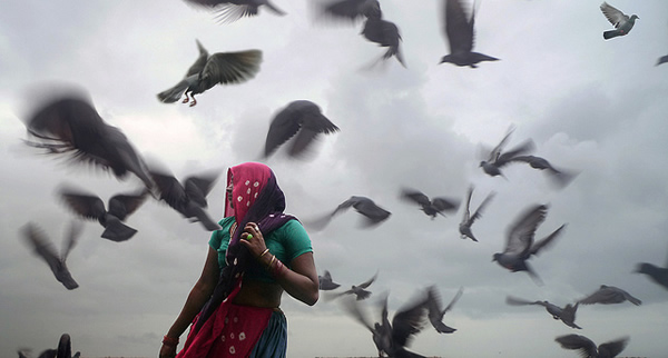 Birds - Indian Color Street Photography