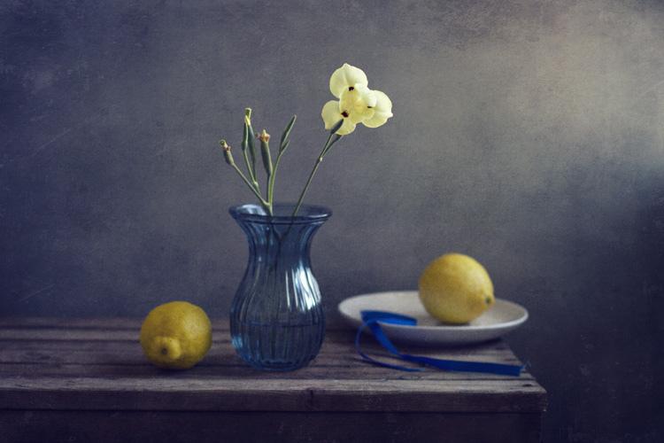 Still Life Fine Art Photography by Anna Nemoy