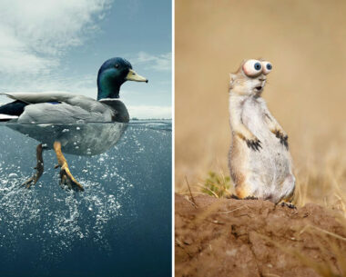 These 75 Creative Photo Manipulation Art Works will make you Look Twice