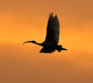 birds_in_flight_photography_thumb