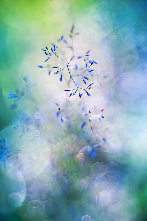 Florence Richerataux: This french Photographer takes craftsty and Bokehlicious Photographs of her garden