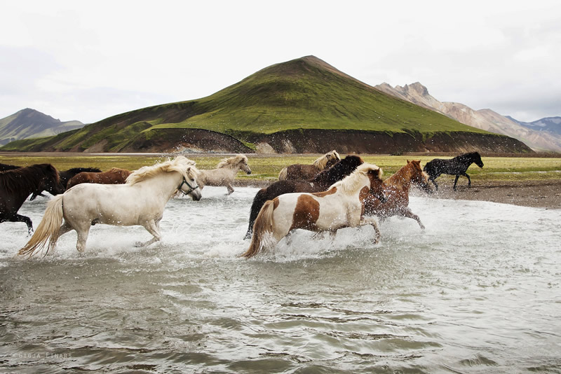 Gigja Einarsdottir is from Iceland and she loves to shoot horses in the most unbelievable way you will see
