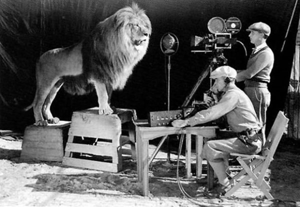 Here are cameramen shooting and recording the lion roar for the MGM logo.