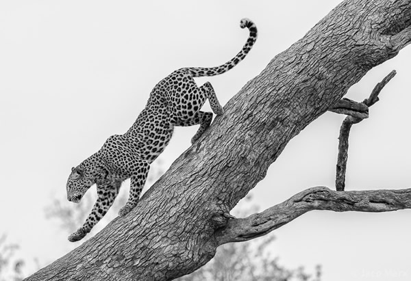 Why going on a safari will do more than just improve your photos by Jaco Marx