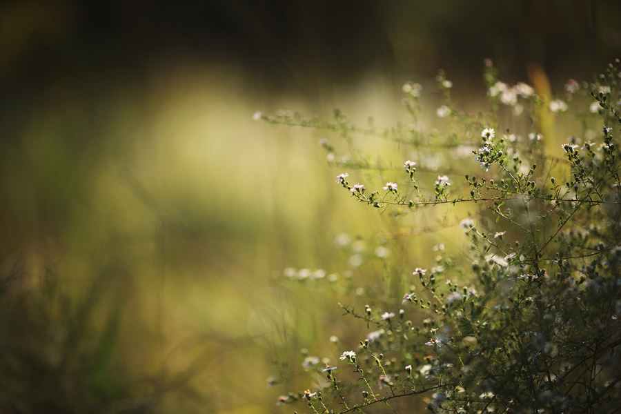 Beautiful Bokehlicious Photography By Tammy Schild