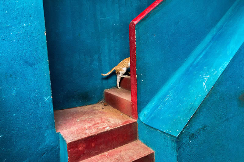 Cat and Blue - Street Photography and art of the composition