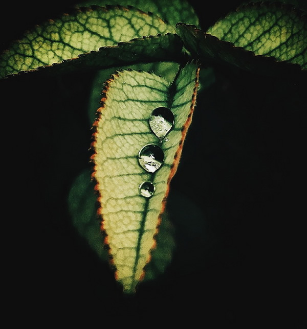 Leaves - Photography Series By Indian Photographer NS Hrishikesh