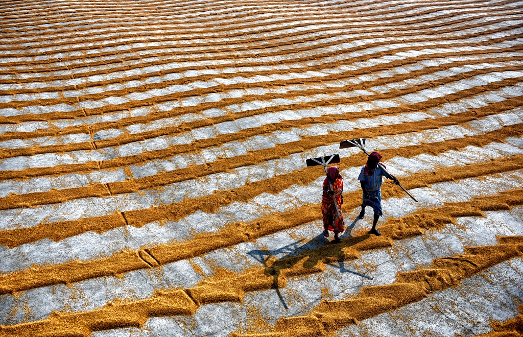 Manual Drying Process Of Rice Grain: Photo Series By Indian Photographer Avishek Das