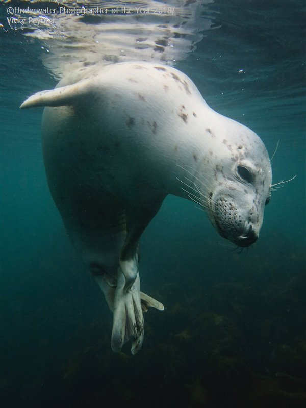 British Waters Compact - Winner 'Scratchy Seal' - Vicky Paynter