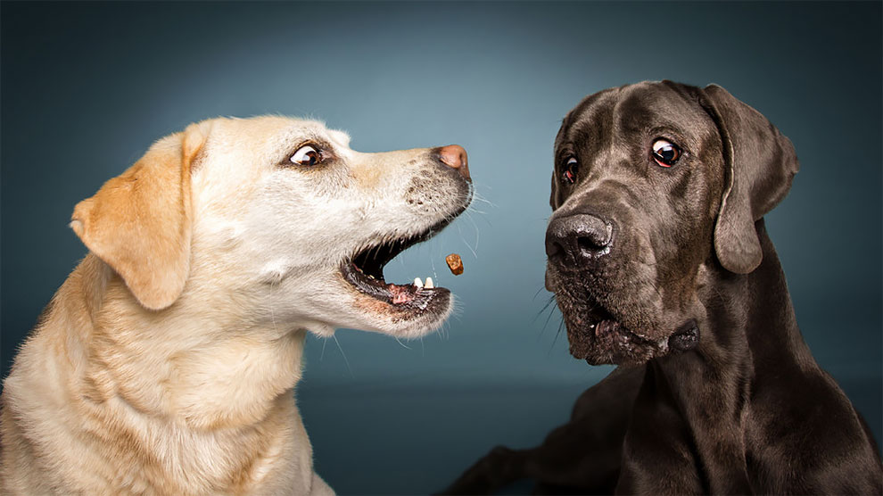 Photographer Christian Vieler Amazingly Captured The Portraits Of Dogs Catching Treats in Mid-Air