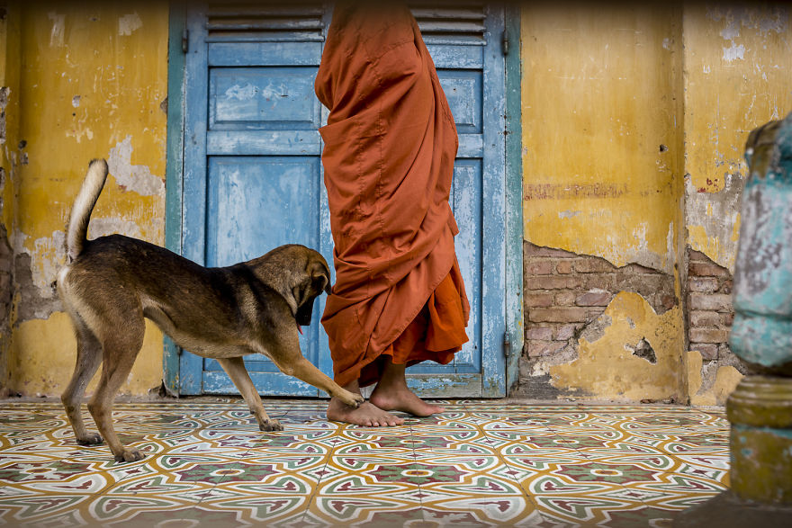 The dog wants to play the young monk