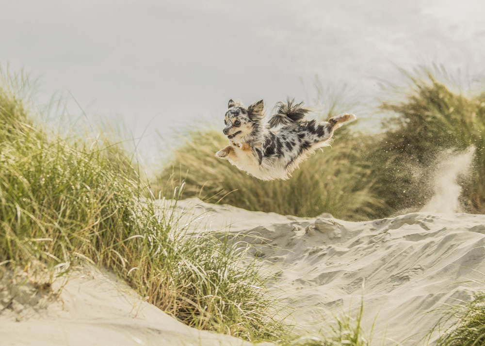 2nd Dogs at Play By Steffi Cousins