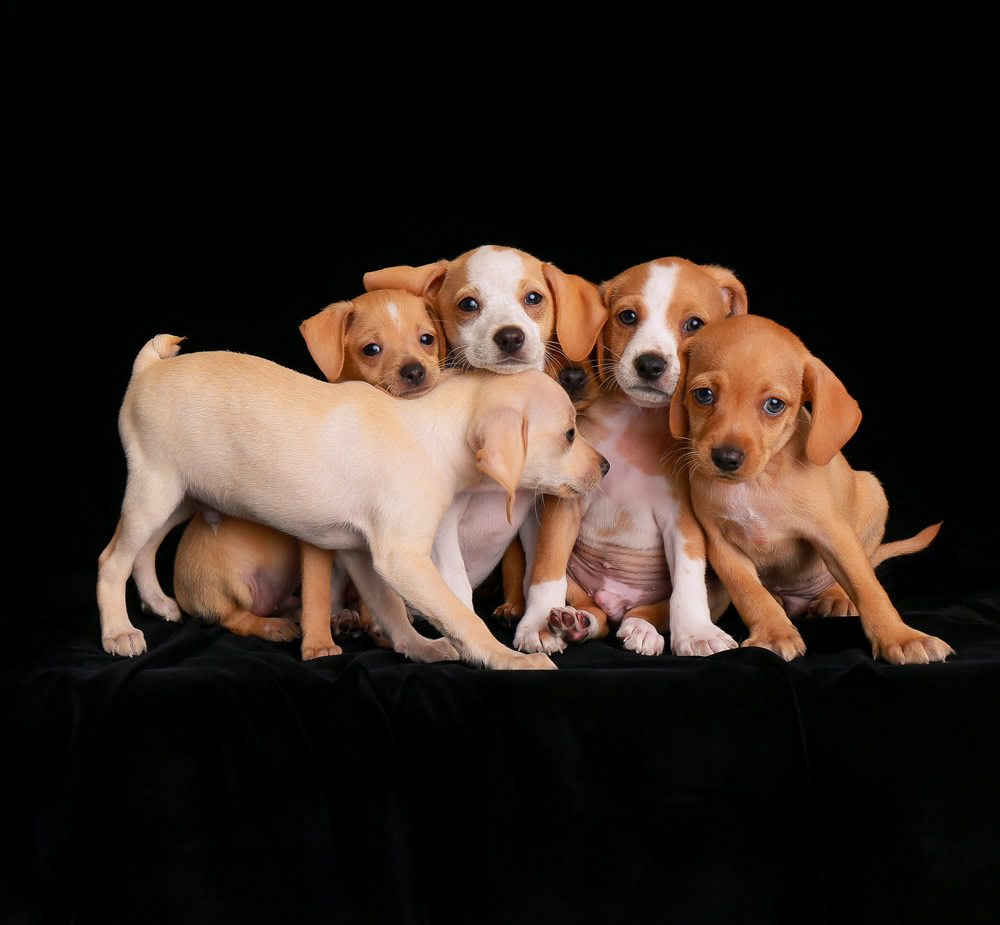 2nd Puppies By Charlie Nunn