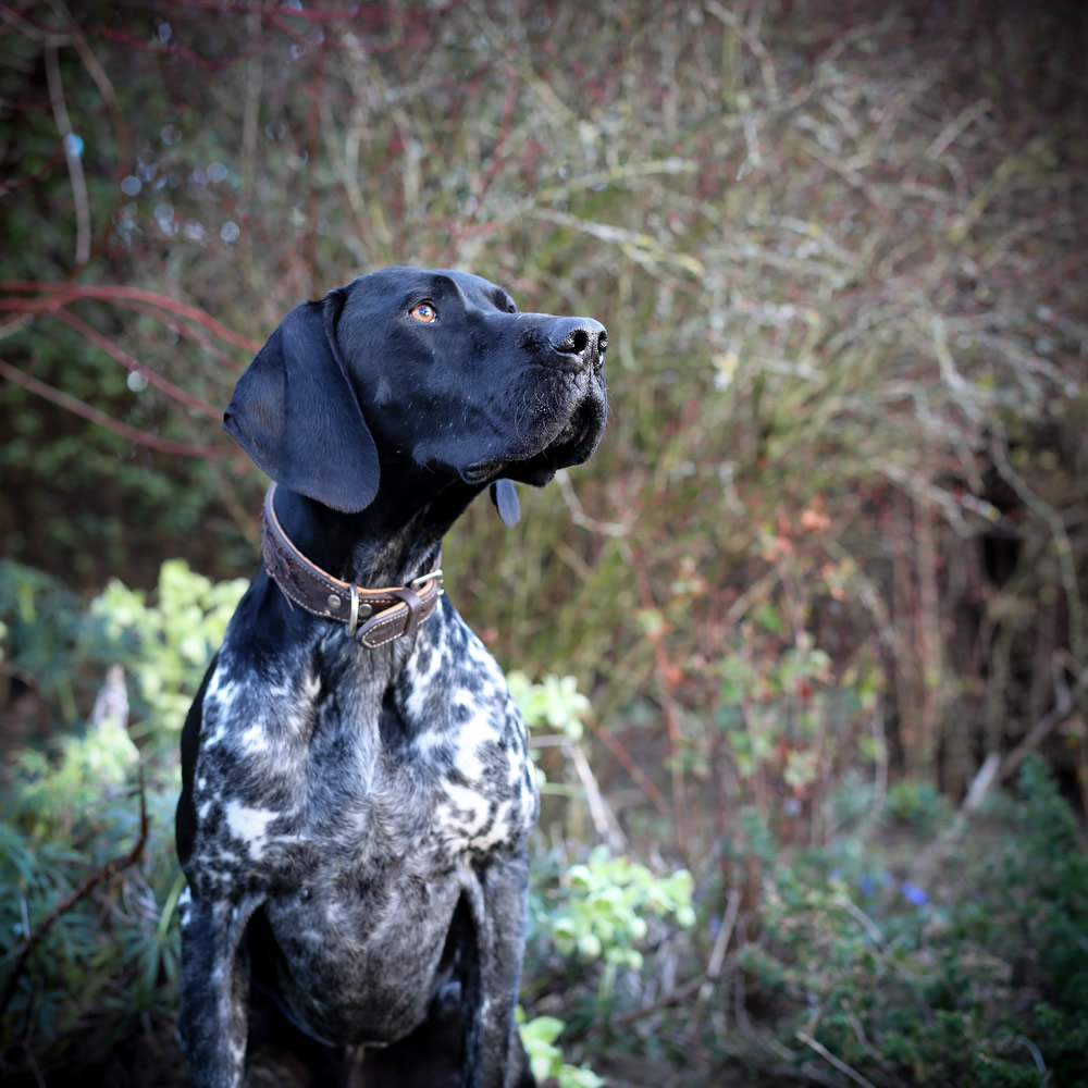 3rd Young Pup Photographer By Maisie Mitford