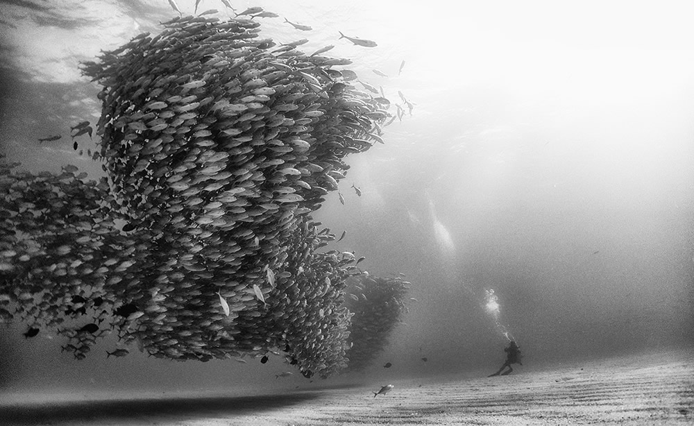 Beautiful Black And White Photographs Of Under The Sea By Anuar Patjane Floriuk
