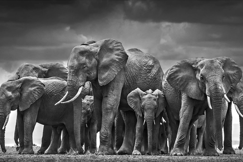 British Photographer David Yarrow Talking About His Photography Journey