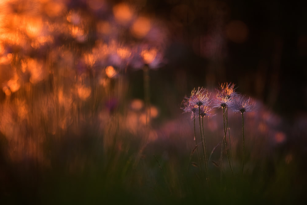 Beautiful Interview With French Nature Photographer Thomas Vanderheyden