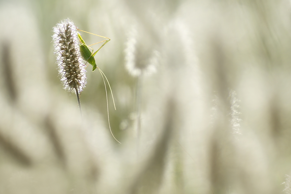 Interview With French Nature Photographer Sébastien Blomme