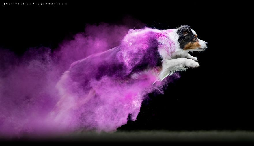 Canadian Photographer Jess Bell Captured Artistic Images Of Animals In Action
