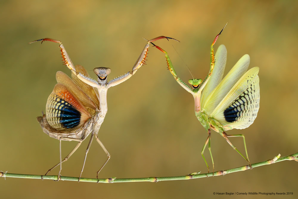 Best Entries (So Far) Of Comedy Wildlife Photography Awards 2019