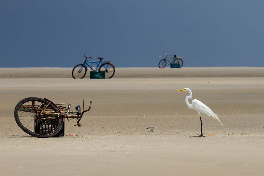 Mark Peck - Birds In The Environment - Honorable Mention