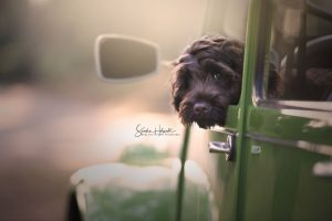 Dogs And Their Rides: Fine Art Photography By Sandra Helsocht