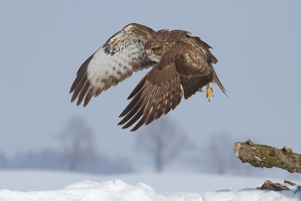 Take-off - 2020 Bird Photographer of the Year (BPOTY)