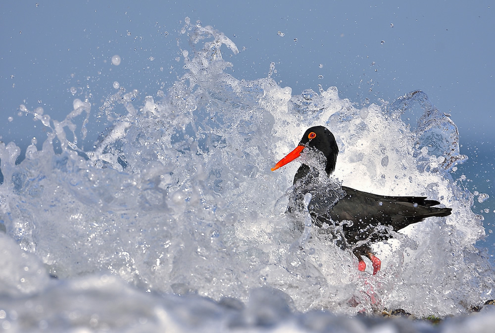 The Wave - 2020 Bird Photographer of the Year (BPOTY)