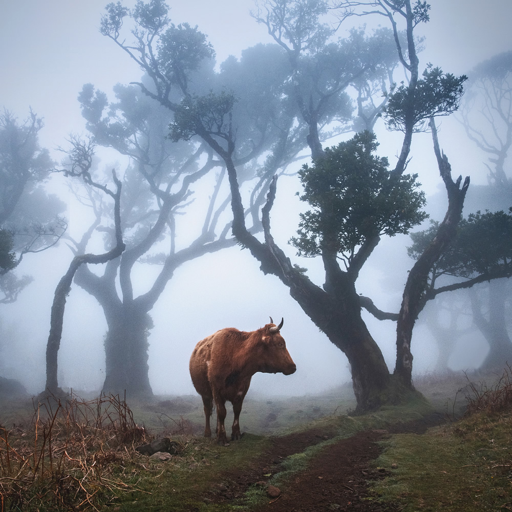 From Fog Into Light: Beautiful Forestscapes by Kilian Schönberger