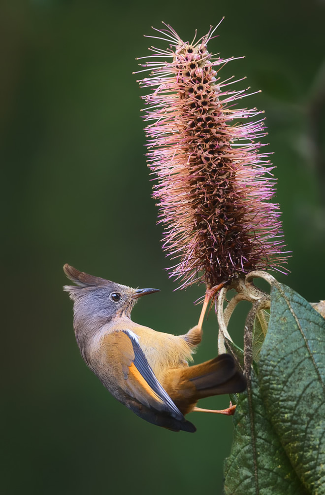 Misty Borong: Romancing With Birds And Flowers By Chandan Hazra