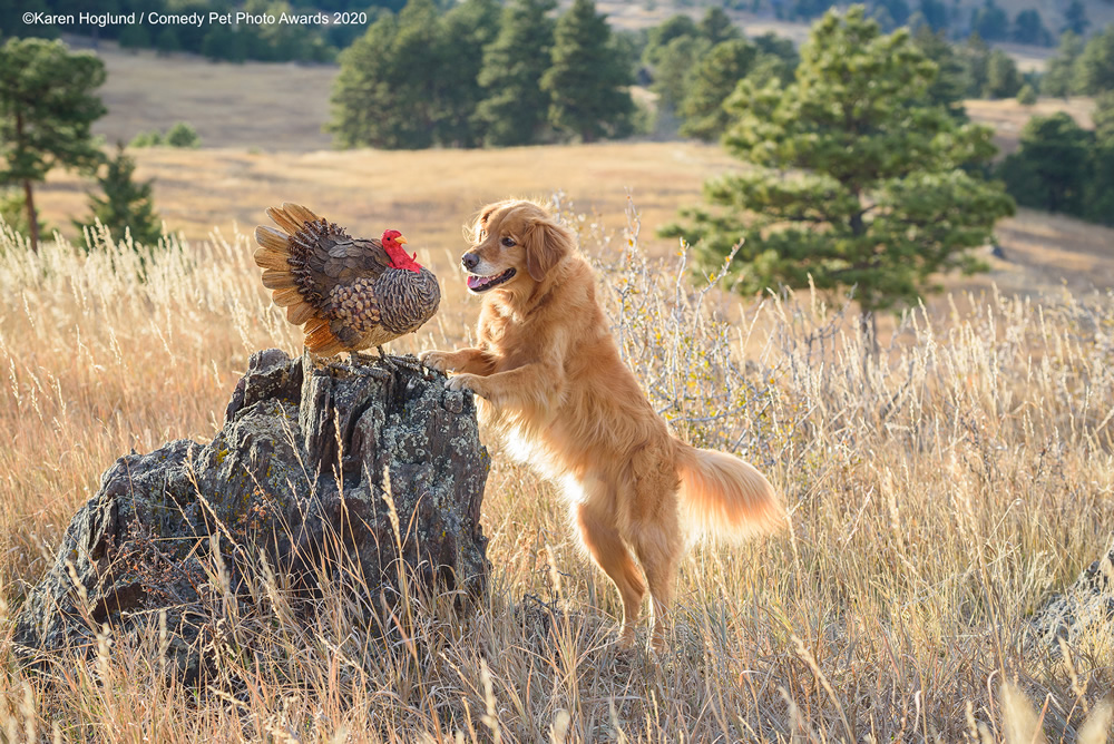 Hunting Dog Drop Out by Karen Hoglund