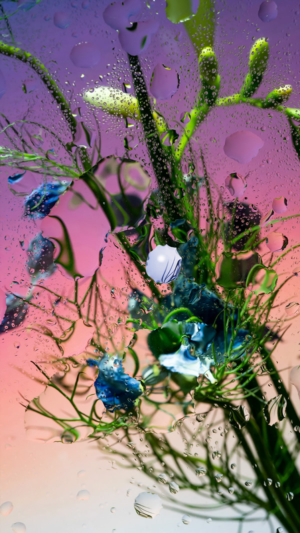 Inside Out: Beautiful Floral Photography By Davy Evans