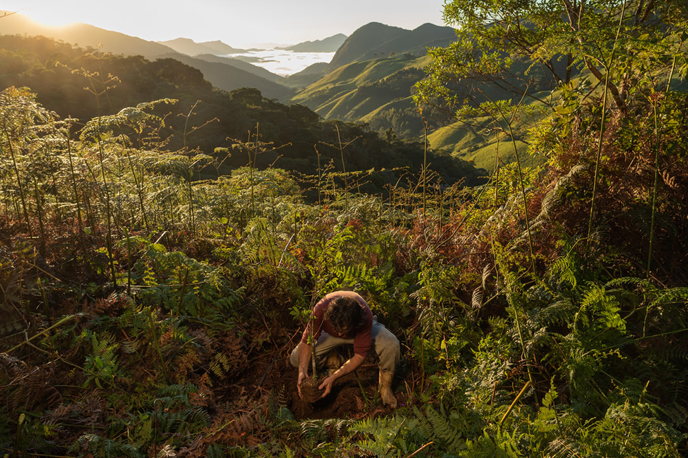 Meet The Forest Growers Of Mata Atlântica By Renato Stockler
