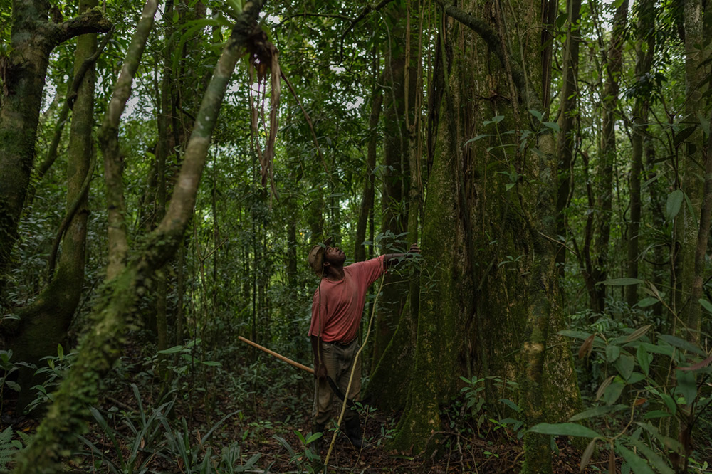 Forest Growers Of Mata Atlântica By Renato Stockler