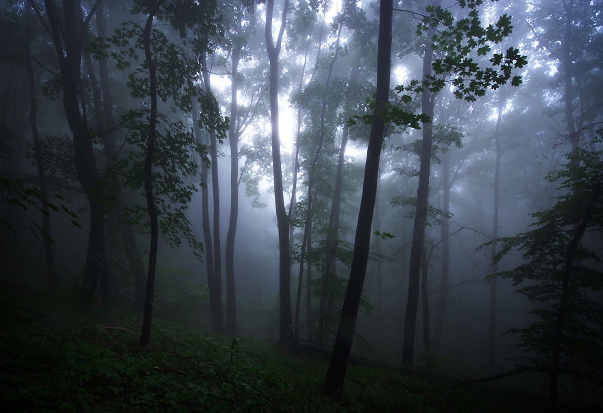The Most Epic Misty Forest I've Seen