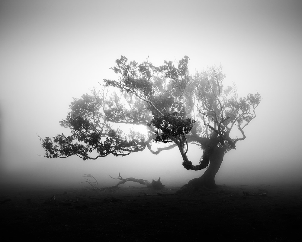 Stunning Black and White Photos Of Madeira's Ancient Trees By Michael Schlegel