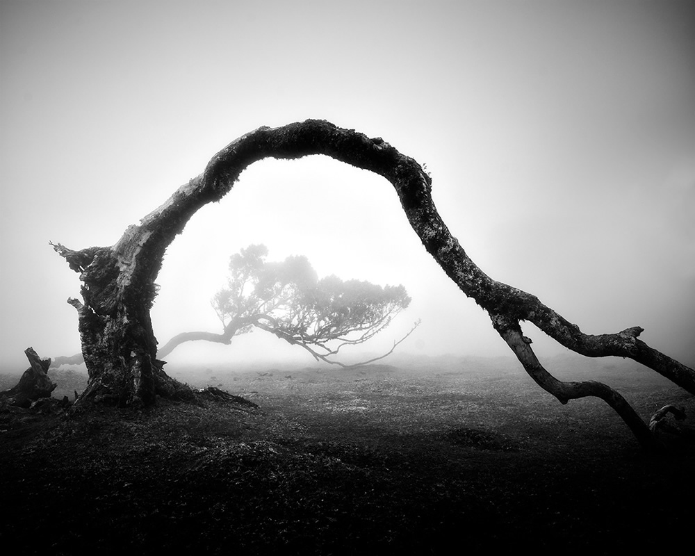 Black and White Photos Of Madeira's Ancient Trees By Michael Schlegel