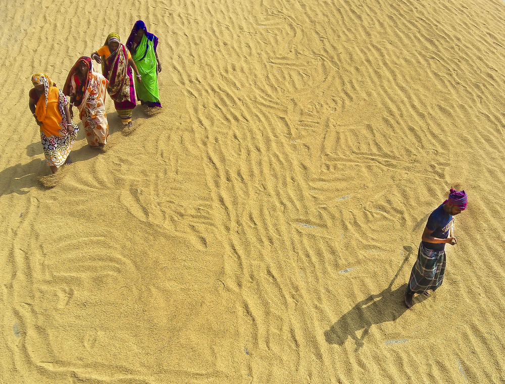 Paddy Grain Drying Process Of Village People By Ehsanul Siddiq Aranya