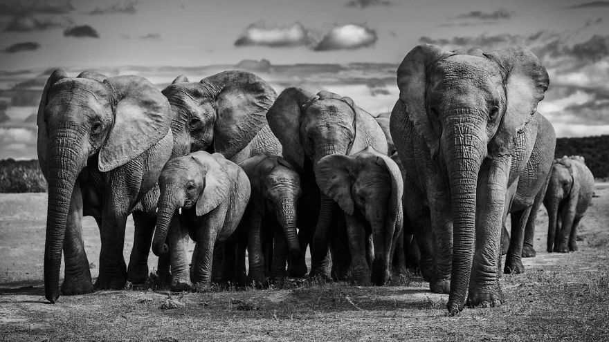 #11 Family Of Elephants
