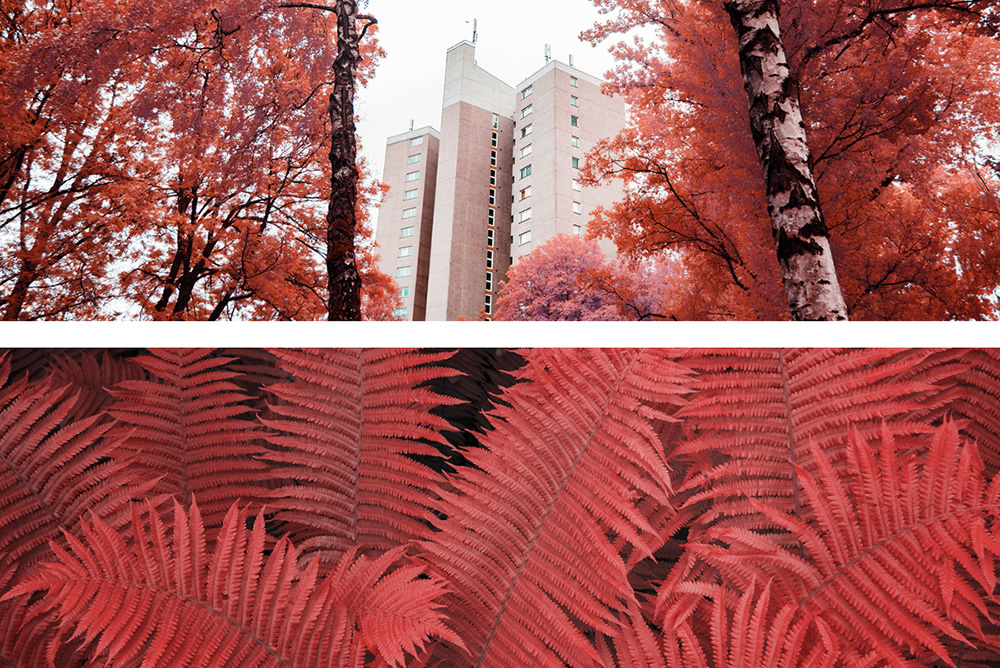 The Strange Series: A Study Of Experimental Infrared Photography by Roland Kramer