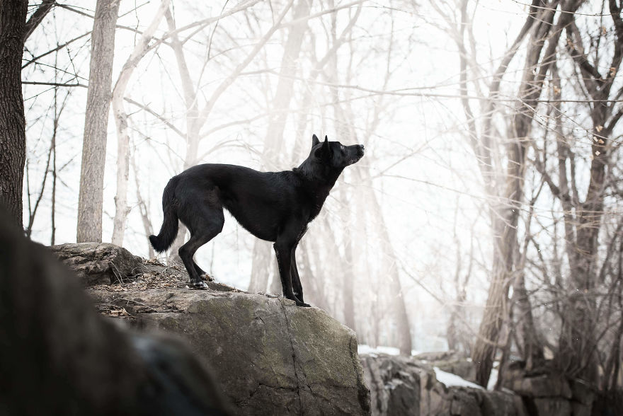 Black Animals Are Awesome By Canadian Photographer Chantal Levesque